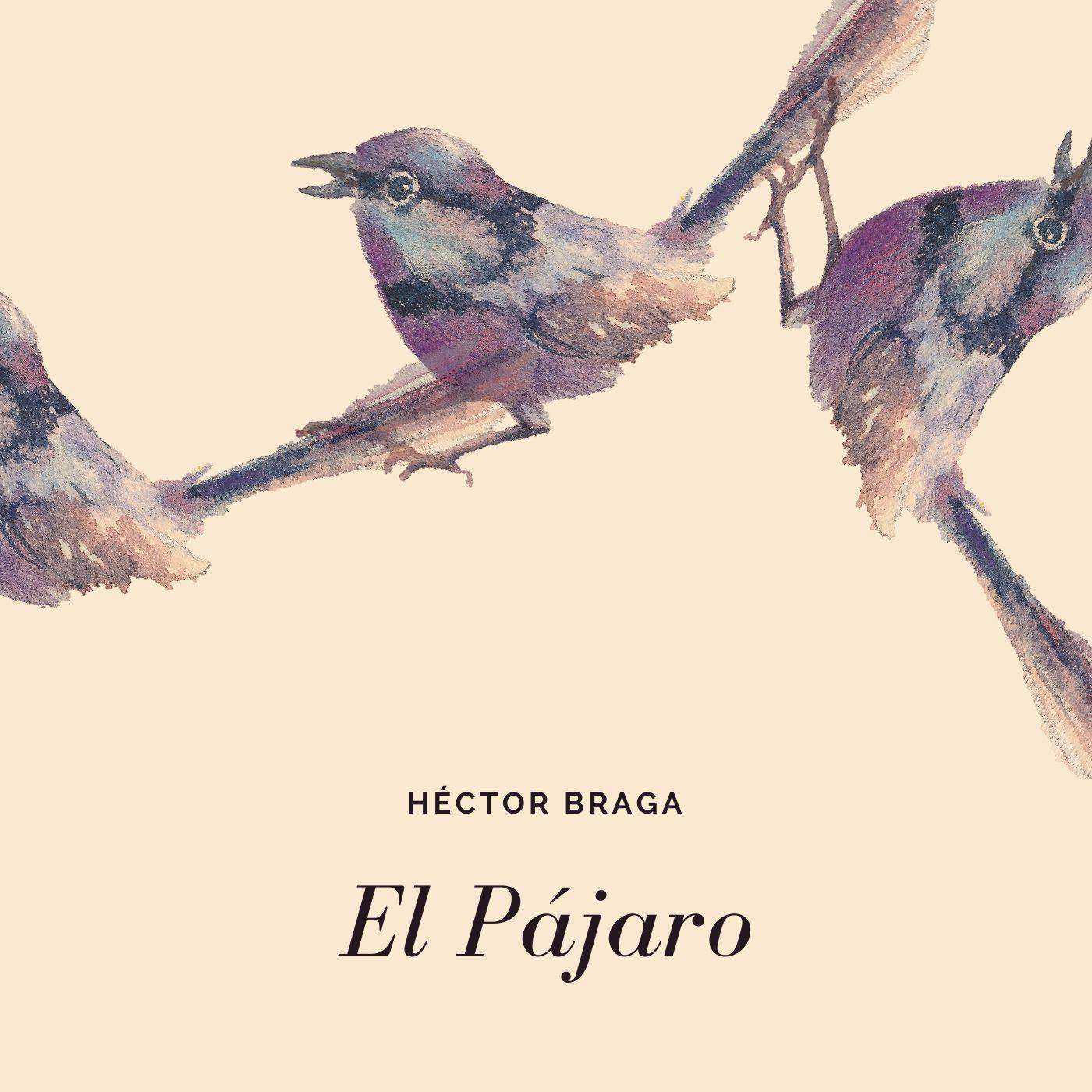 El Pájaro (2020) - sencillo